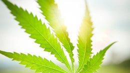 MMJ Set to Unlock Value in Bullish Canadian Cannabis Market